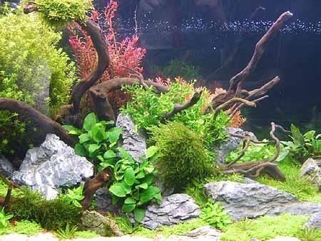 aquarien-richtig-gut-neu-einrichten