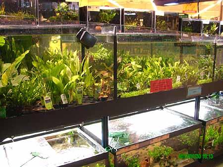 AquarienZierfischbörsefürFischeundPflanzen