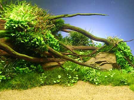 aquarium-forum-aquaristik