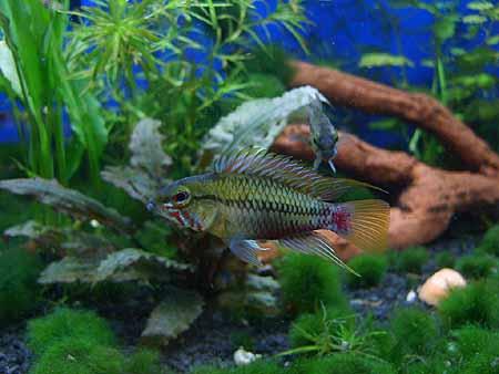 aquarium-probleme-algen-schnecken