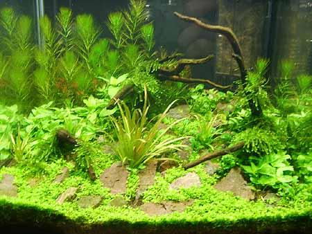 Aquarium Neu Einrichten Mit Fisch Pflanzen Steinen Etc Becken