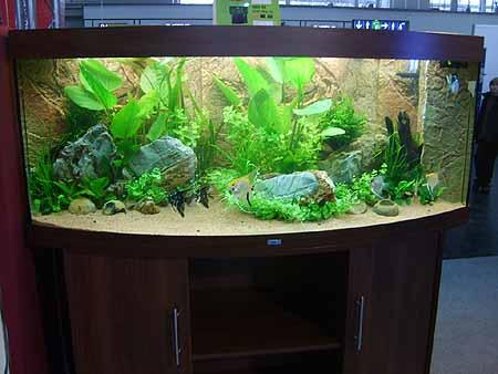 Led Beleuchtung Für Aquarium Kaufen | Led Beleuchtung Lampen Im Aquarium Sparsam Hohe Leuchtkraft