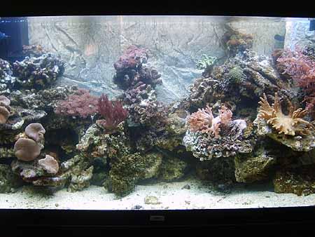 meerwasser-aquaristik-korallen