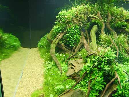pflanzen-aquarien-pflege