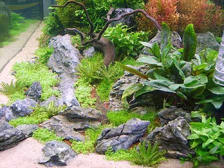 pflanzen-einsetzen-aquarium