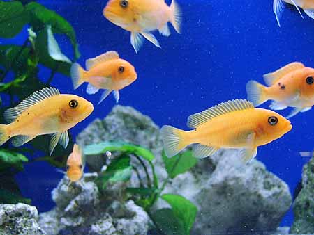 Screensaver-Aquarium-Computer-3D-Wallpaper