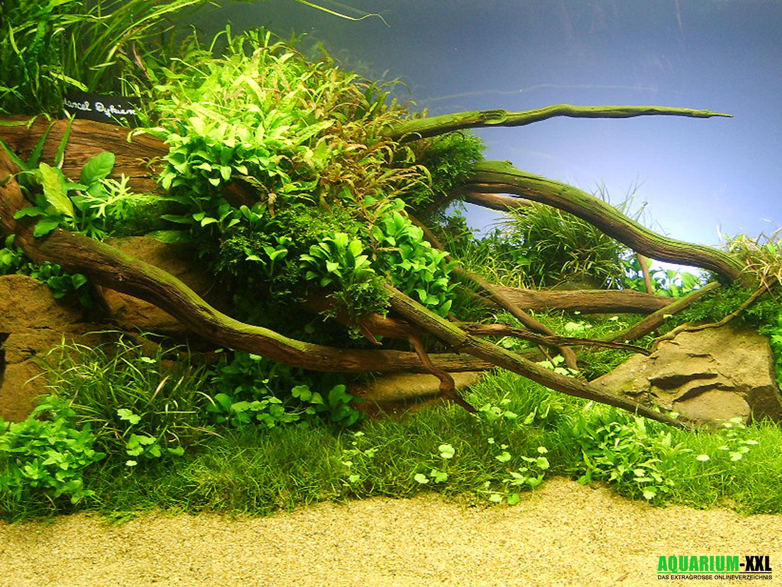 unterwasser aquarium hessen