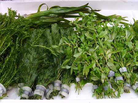 wasserpflanzen-halten-vermehren-co2