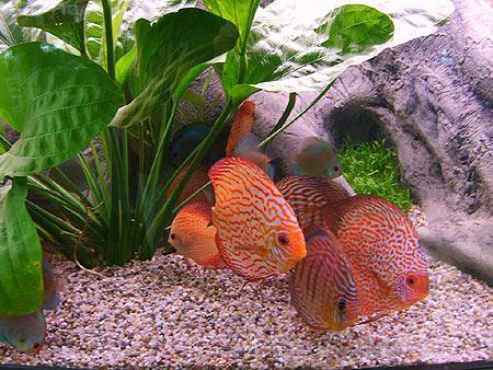 aquarien-kies-steine--201203310011303.jpg