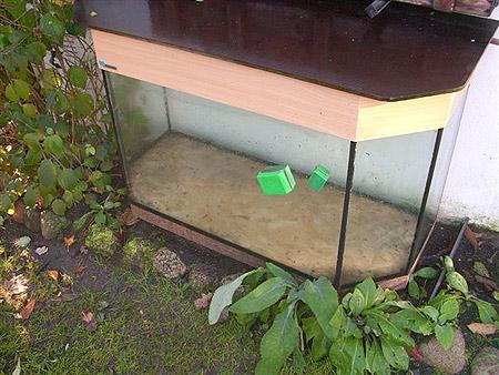 aquarium-mit-kratzer-201211200017013.jpg