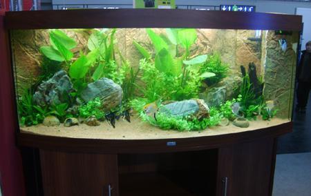 aquarium-ohne-luftpumpe-201211191922522.jpg