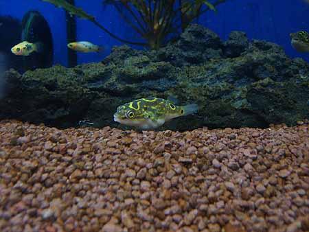 bodenfilter-aquarium-201202100109021.jpg