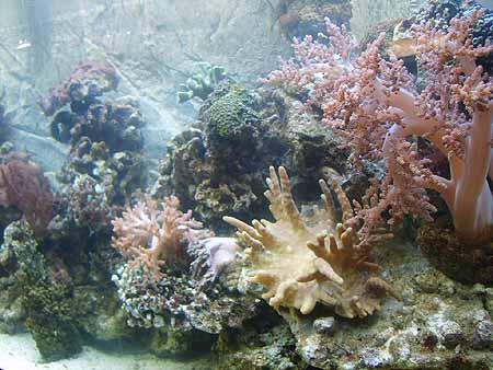 eiweiss-aquarium-meerwasser-201202092217401.jpg