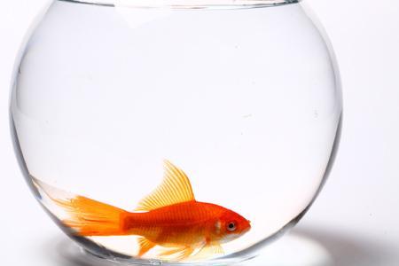 Goldfischglas, kleine mini Goldfischgläser als Aquarium ...