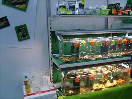 kleine-mini-aquarien-anlagen-201202111607591.jpg