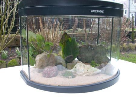 kleines-aquarium-einrichten.JPG-201203240217412.jpg