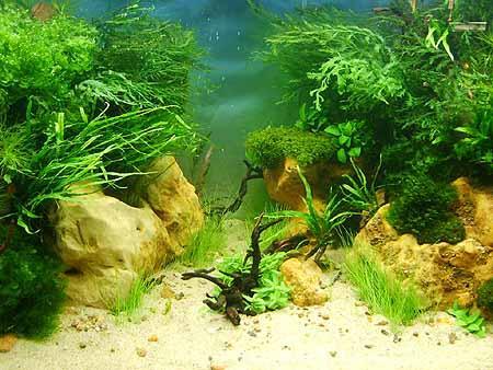 pflanzen-co2-kohlendioxid-versorgung-201202111539211.jpg