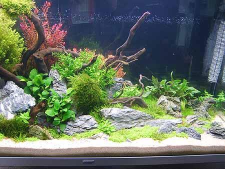 pflanzen-licht-duenger-aquarium-201202111604491.jpg
