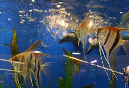 sauerstoff-fische-aquarien-201211191922521.jpg