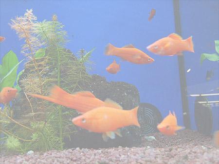 truebung-wasser-aquarium-201202100129461.jpg