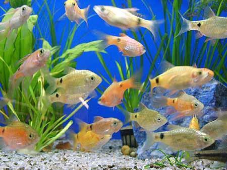 viele-fische-aquarium-201202111600581.jpg