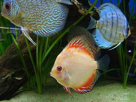 vorgeschaltete-denitrifikation-aquarium-201202092220401.jpg
